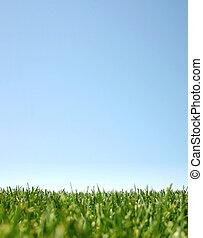 Blauer Himmel und grünes Gras: Glücksland