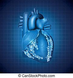 blaues, herz, abbildung, medizin, design, menschliche , abstrakt