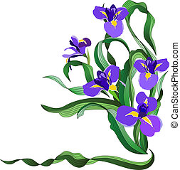 blaues, iris, bündel