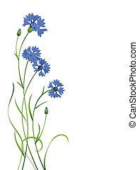 Blaues Kornblumen-Straußmuster isoliert