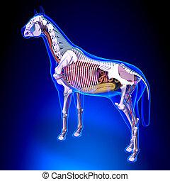 blaues, pferd, -, zurück, koerperbau, intern, hintergrund, ansicht