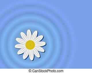 Blume auf dem Wasser