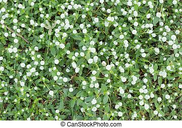Blume Natur Hintergrund.
