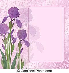 Blumen Iris auf rosa Hintergrund