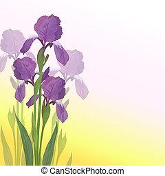 Blumen Iris auf rosa und gelbem Hintergrund