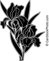 blumen, iris, logo, pictogram., oder, knospe, blumen, silhouette, illustration., iris, schwarz, bestand, vektor, zwei, -, blätter