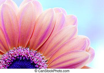 Blumennähe, Sonnenlicht von hinten