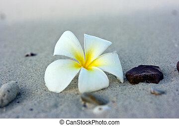 Blumenstrand