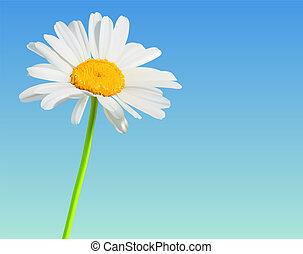 Blumenvektor Natur-Hintergrund. Kamilleblüte