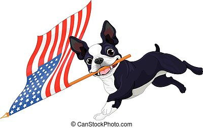 Boston Terrier unter Flagge.