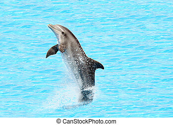 Bottlenose Delfin (Trüffel truncatus)
