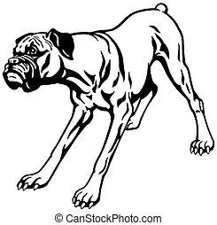 Boxerhund schwarzweiß.
