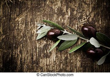 Branch mit frischen schwarzen Oliven
