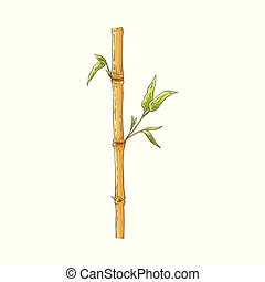 Brauner Bambusstab mit grünen Blättern im Zeichenstil, isoliert auf weißem Hintergrund.
