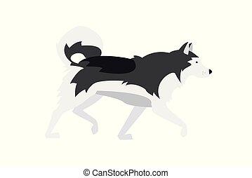breed., malamute., alaskisch, -, hund, grau, illustration:, vektor, nordisch, schwarz, weißes