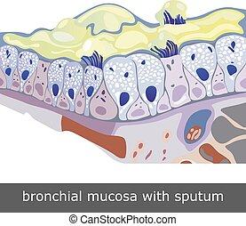 Bronchial mucosa mit Sputum.