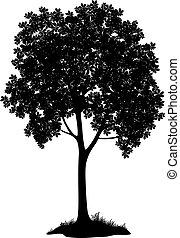 Brustnussbaum, Silhouette