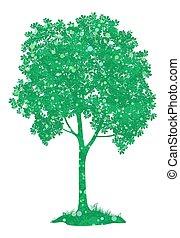 Brustnussbaum. Vector