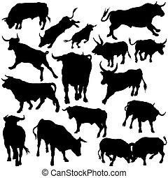 Bull hat Silhouettes aufgestellt