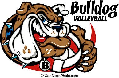 Bulldog mit Volleyball