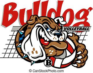 Bulldog Volleyball mit Netz.