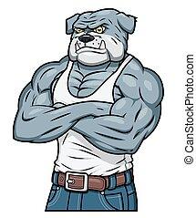 bulldogge, aggressiv, starke , muskel