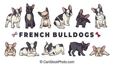 bulldogge, franzoesisch, hintergrund, vektor, bulldogs., lustiges, freigestellt, weißes, junger hund, set., karikatur