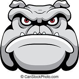 bulldogge, gesicht