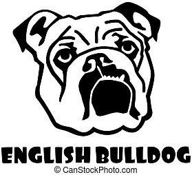 bulldogge, kopf, englisches