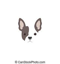 bulldogge, kopf, franzoesisch