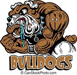 bulldogge, muskulös, mittel