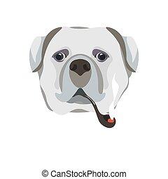 Bullmastiff züchtet Hund mit Raucher-Rauch-Schalter-Porträt auf weiß