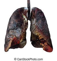 cancered, render, lungen, freigestellt, white., 3d