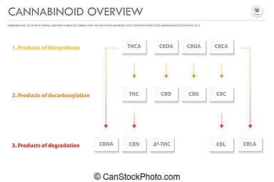 cannabinoid, überblick, geschaeftswelt, infographic, horizontal