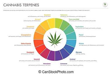 cannabis, geschaeftswelt, terpenes, infographic, horizontal
