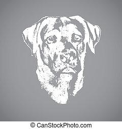 Chef des Hundes, Labrador Retriever