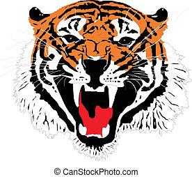 Chef eines Sumatran-Tigers