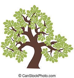 Chestnutbaum auf weißem Hintergrund