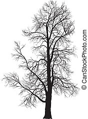 Chestnutbaum