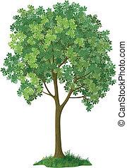 Chestnutbaum. Vector