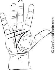 Chiromancy Hand mit Linien des Lebens, Liebe, Verstand und Schicksal. Palmistry Vektorzeichnung