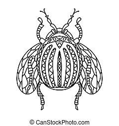 colorado, buch, wings., vektor, weißes, käfer, fliegendes, potatoes., schwarz, kunst, linie, abbildung, erwachsene, kinder, plage, färbung, insect.