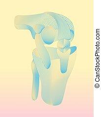 concept., bein, knie, traumatology, patella, orthopädie, koerperbau, knee., gelenk, symbol, joint.