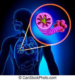 COPD - chronische Obstruktion.