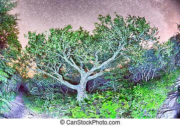 Craggy Gärten nördlich Carolina blauer Kammparkplatz Herbst NC sceni.