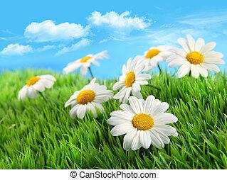Daisies im Gras gegen einen blauen Himmel