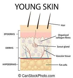 darstellung, skin., visuell, junger