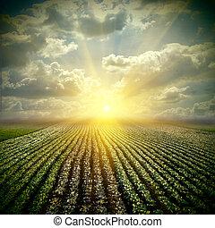 Das feine Kohlfeld ist der Himmel