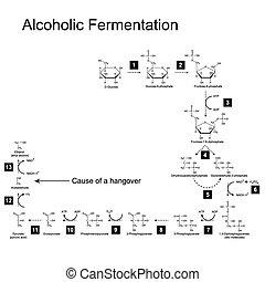 Das Schema der alkoholischen Gärung.