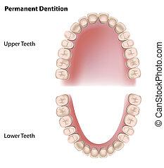 Dauerhafte Zähne, Eps8